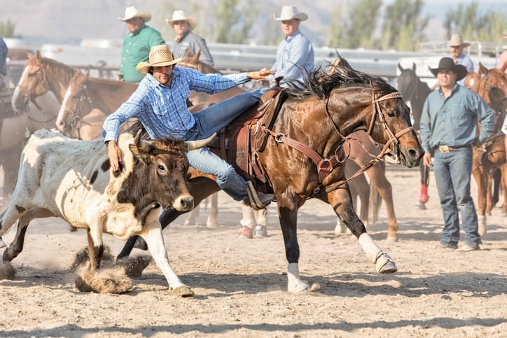 rodeo cowboys wrangling a bull